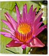 Beyond Beautiful Water Lily 3 Canvas Print