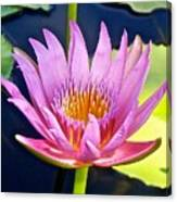 Beyond Beautiful Water Lily Canvas Print