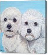 Bichon Frisee Canvas Print