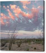 Big Bend Sunrise-blooming Ocotillo Canvas Print