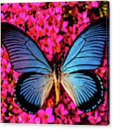 Big Blue Butterfly On Kalanchoe Flowers Canvas Print