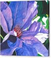 Big Blue Clematis Canvas Print