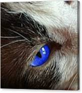 Big Blue Eyes Cat Canvas Print