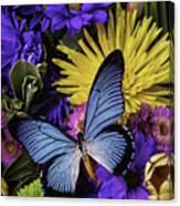 Big Blue Wings Canvas Print