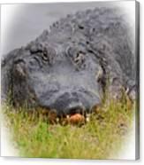 Big Boy Gator 2 Canvas Print