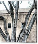 Big Branch Canvas Print