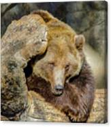 Big Brown Bear Canvas Print
