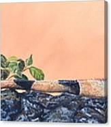 Big Bubba Iguana Canvas Print