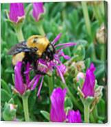Big Bumblebee Canvas Print
