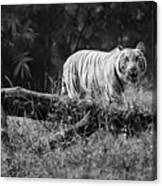 Big Cat In The Woods Canvas Print