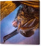 Big Eared Bat At Sunrise Canvas Print