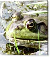 Big Eyed Frog In A Marsh Canvas Print