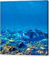 Big Fish. Underwater World. Canvas Print
