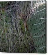 Big Fluffy Cactus Canvas Print