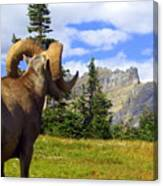 Big Horn 3 Canvas Print