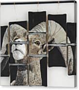 Big Horn Fragments Canvas Print