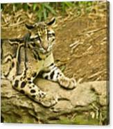 Big Kitty Cat Canvas Print
