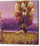 Big Otter Creek - Dawn Canvas Print