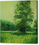 Big Otter Creek - High Noon Canvas Print