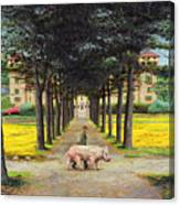 Big Pig - Pistoia -tuscany Canvas Print