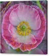 Big Poppy 4 Canvas Print