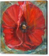 Big Red Poppy Canvas Print