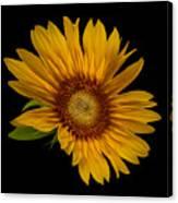 Big Sunflower Canvas Print