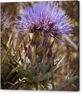 Big Thistle 2 Canvas Print
