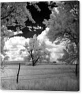 big tree in field IR Canvas Print