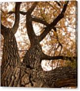Big Tree Canvas Print