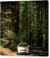 Big Tree Road Canvas Print