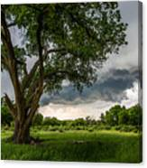 Big Tree - Tall Cottonwood And Storm In Texas Panhandle Canvas Print