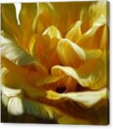 Big Yellow Rose Canvas Print