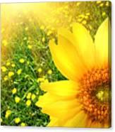 Big Yellow Sunflower  Canvas Print