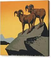 Bighornthe National Parks Preserve Wild Life Canvas Print