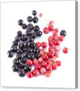 Bilberries And Cowberries Isolated Canvas Print