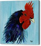 Billy Boy The Rooster Canvas Print