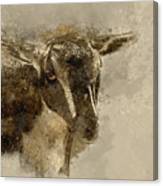 Billy Canvas Print