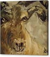 Billy Goat Gruff Canvas Print