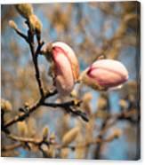 Biltmore Cherry Blossom Canvas Print