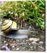 Biological Drive Cleaner Canvas Print