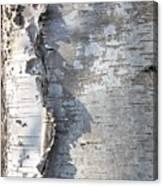Birch Abstract 2 Canvas Print