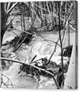 Birch And Stream Canvas Print