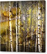 Birch Bark And Trees Abstract Canvas Print