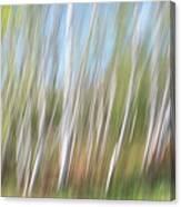 Birch Dream #3 Canvas Print