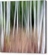 Birch Grove Impressions Canvas Print