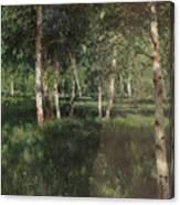 Birch Grove Canvas Print