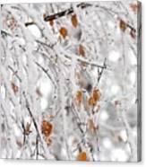 Frost Birch  Canvas Print