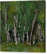 Birch Tree Panorama Canvas Print