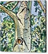 Birch Tree Sketchbook Project Down My Street Canvas Print